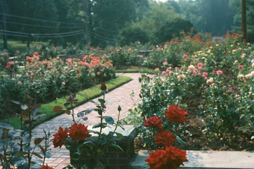 Fun in Huntington make sure to visit the Rose Garden at Ritter Park